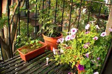 fire escape garden viewed from far window, with wide-angle lens